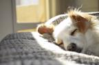 Writing A Blog When You're Very Sleepy